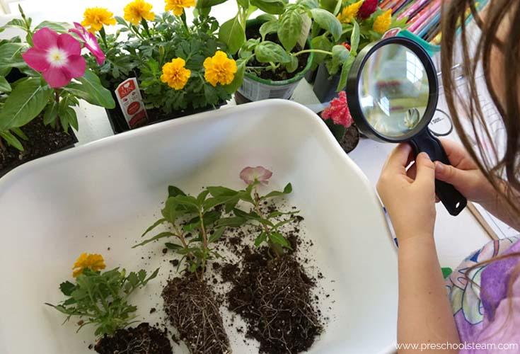 plants explore
