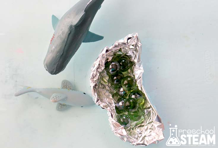 shark boat 1