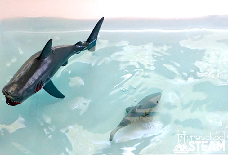 shark water