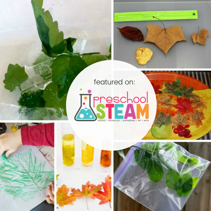 Leaf STEAM activity