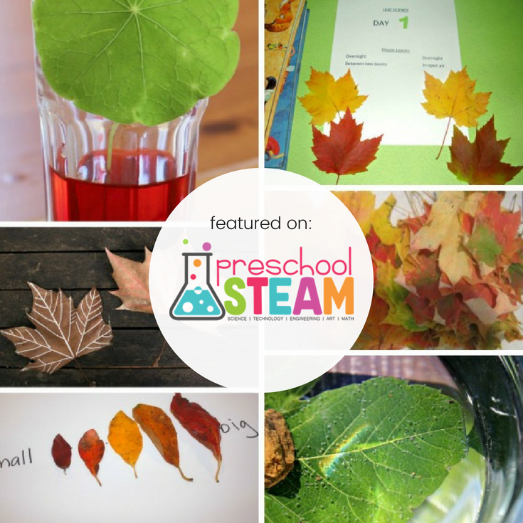Leaf Science Experiments for Preschoolers