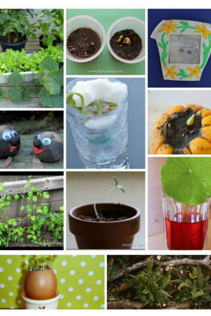 Science Plant Activities